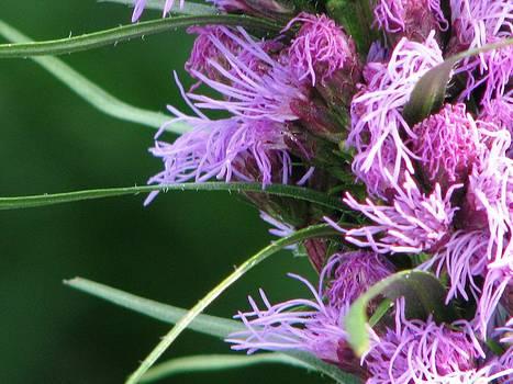 New Life Blooms by Judyann Matthews