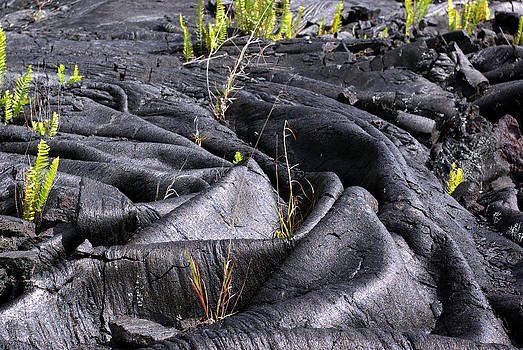 New Life in Lava by Ed Fenwick