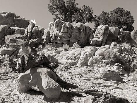 New Mexico Landscape by Sherry Davis