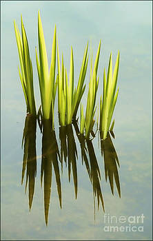 New Reeds by George Hodlin