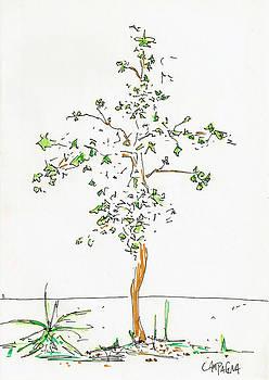 Teddy Campagna - NEW TREE