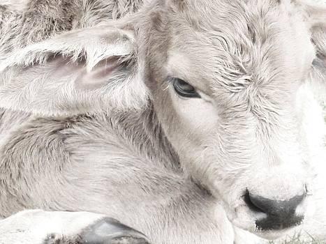 Newborn by Alyssa St Clair