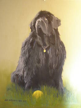 Newfoundland with ball by Eric Burgess-Ray