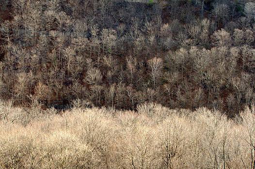 Niagara Gorge by Jale Fancey
