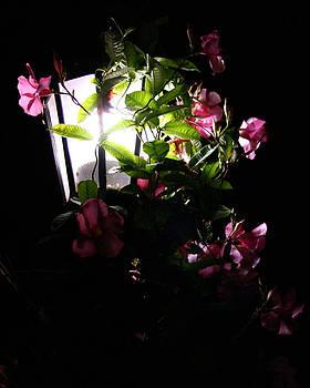 Night Light by Angela Tomey