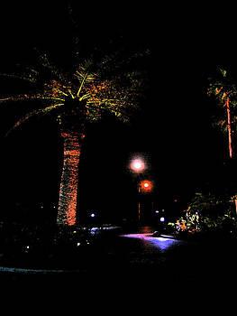 Night Palm by J R Baldini M Photog