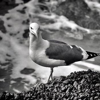 Nikon Dslr Shot! At The Beach. #nikon by Loghan Call
