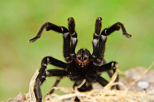 Lisa Moore - Ninja Spider