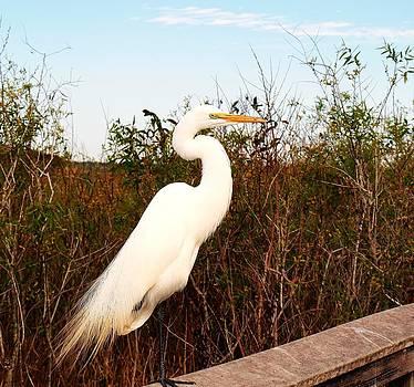 Jim Goldseth - No Egrets