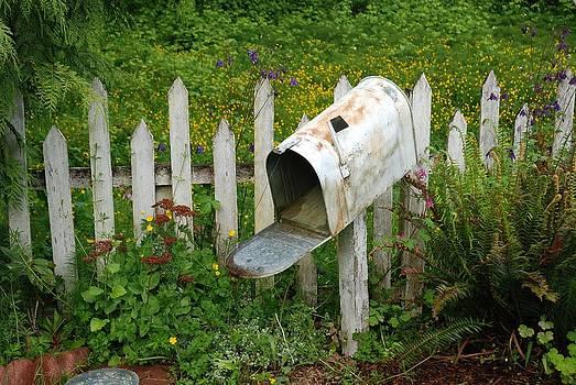 No Mail Today by Wanda Jesfield