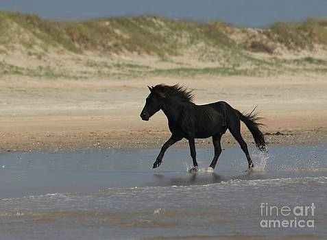 North Carolina Outer Banks Wild Mustang by Lori Bristow
