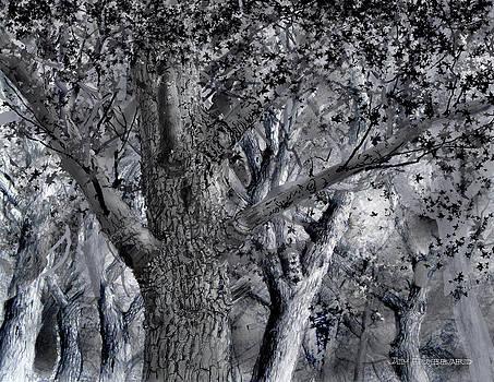 Jim Hubbard - North Dakota-American Elm