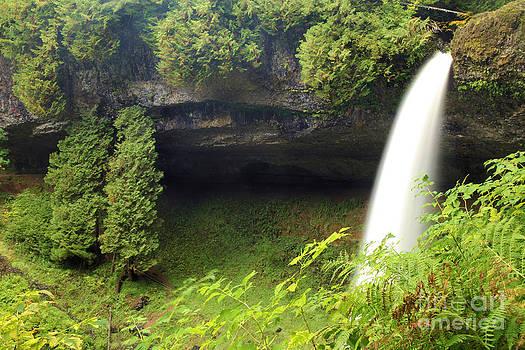 Adam Jewell - North Falls At Silver Falls