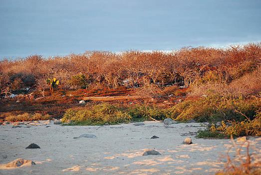 Harvey Barrison - North Seymour Island at Sunset