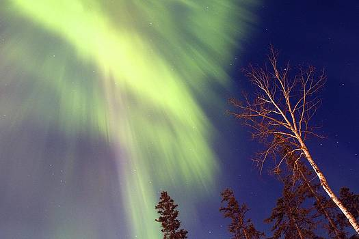 Alanna DPhoto - Northern Light Fall