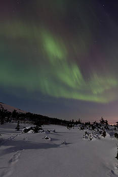 Tim Grams - Northern Lights over a Meadow