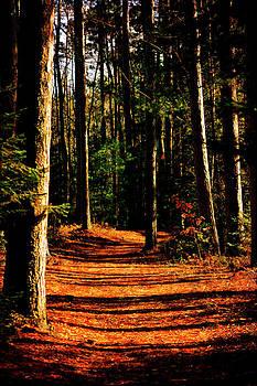 Scott Hovind - Northern Michigan Forest 2