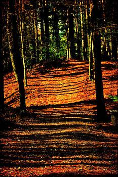 Scott Hovind - Northern Michigan Forest 3