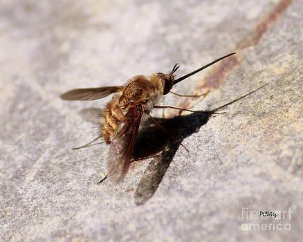 Patrick Witz - Nosy Bug