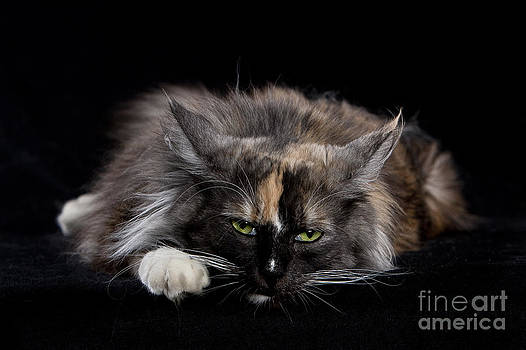 Not Amused by Martina Metschulat