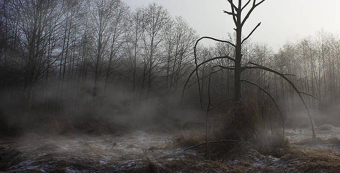 November Mist by Barbara  White