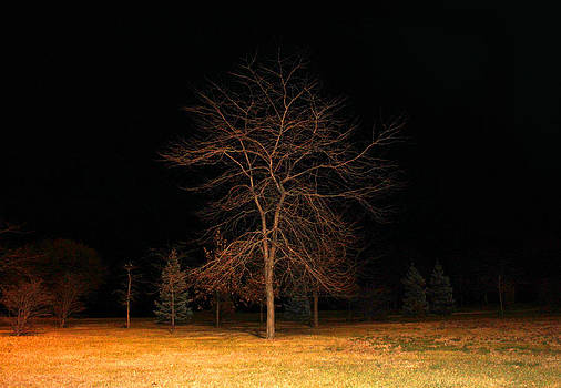 Milena Ilieva - November Night
