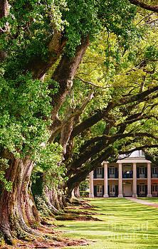Oak Alley Trees by Jeanne  Woods