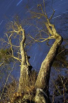 Oak at Night by Sawyer Bickford