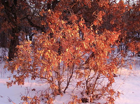 Oak leaves in winter by FeVa  Fotos