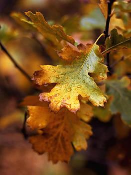 Oak Leaves Yosemite by John Wolf