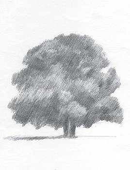 Oak Tree Drawing number one by Alan Daysh
