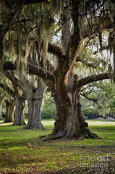 Oak Tree right by Jeanne  Woods