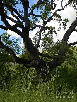 DJ Laughlin - Oak Tree Rise