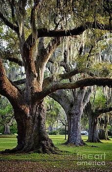 Oak Trees left by Jeanne  Woods