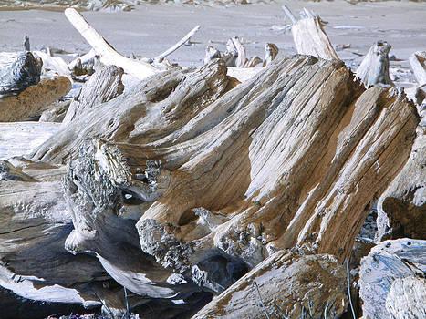 Baslee Troutman - Ocean Driftwood Landscape art prints Coastal Views