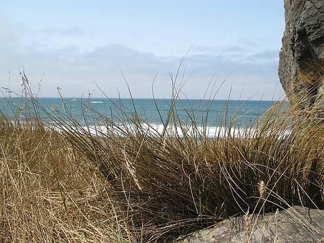 Ocean Grass by Lucie Buchert