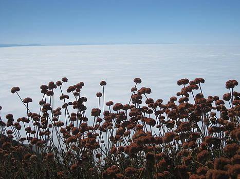 Ocean of Clouds by Diana Poe