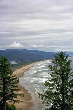 Ocean Through the Pines IMG 6063 by Torrey E Smith