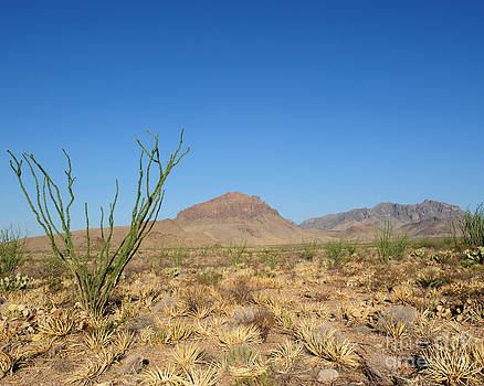 Ocotillo and Mountain by David Chalker