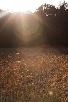 October Dusk - Texas Landscape by Tejas Prints