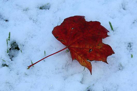 Annie Babineau - October snow
