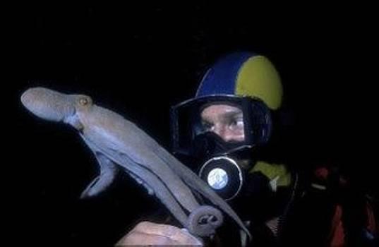 Don Kreuter - Octopus and Friend