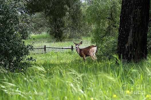 Oh Deer by Tonia Noelle