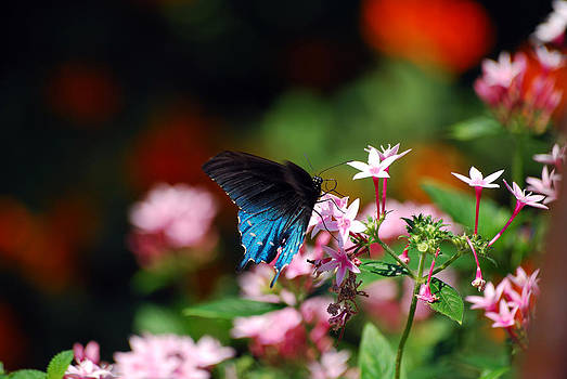 Oh To Be A Butterfly by Lori Tambakis