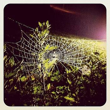 Oh What A Tangled #web We Weave by Robyn Montella