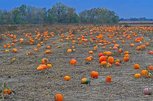 Ohio Pumpkin Patch 2 by Peter  McIntosh