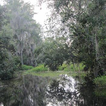 Cathy Lindsey - Okefenokee Swamp 14