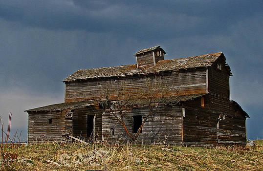 Old Barn II by Sandra Longstreet
