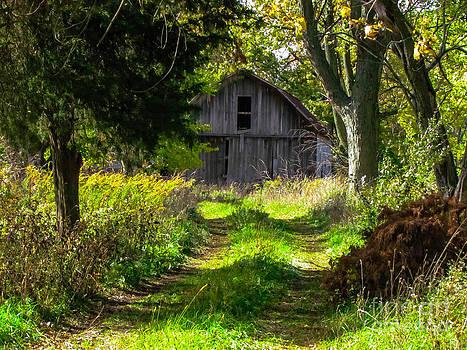 Old Barn In Woods by Alisha Greer
