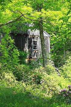 Old Barn by Sara Walsh